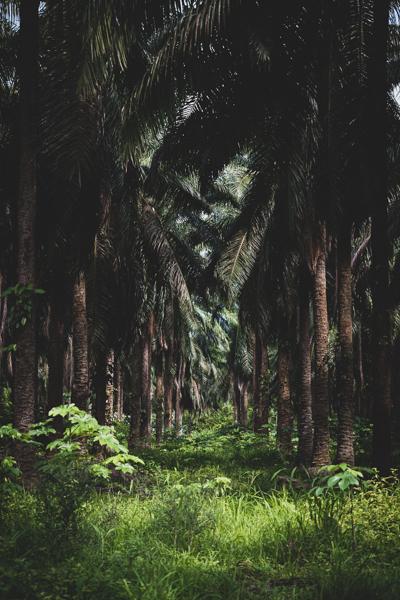The Forest   Chad Schwartzenberger Photography